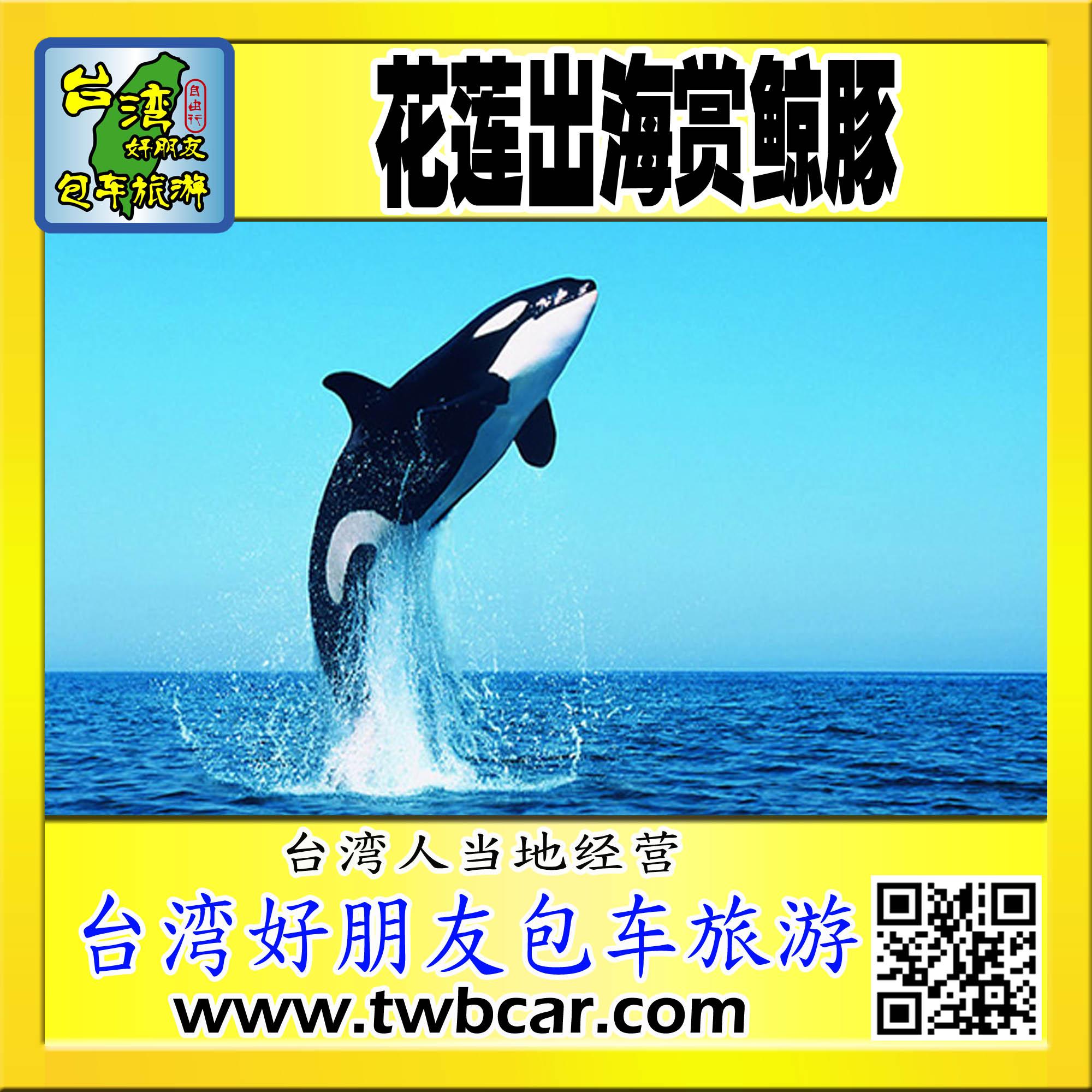 花莲出海赏鲸豚